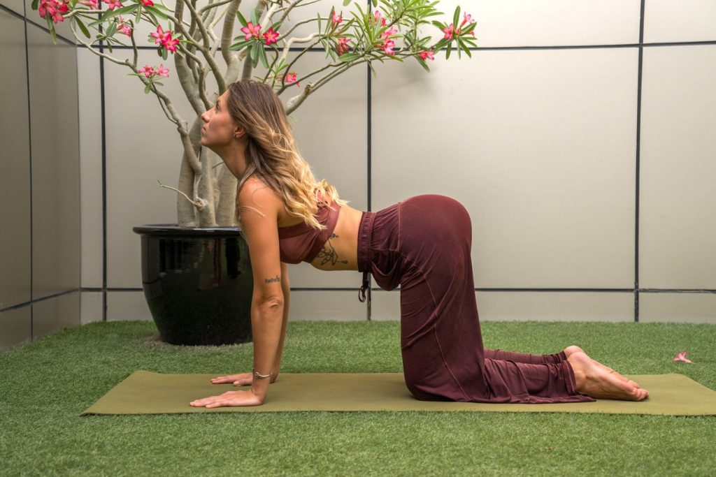 Marjaryasana Posture de Yoga pour débutant